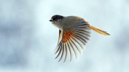طيور (3)