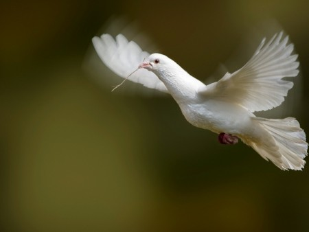 طيور (4)
