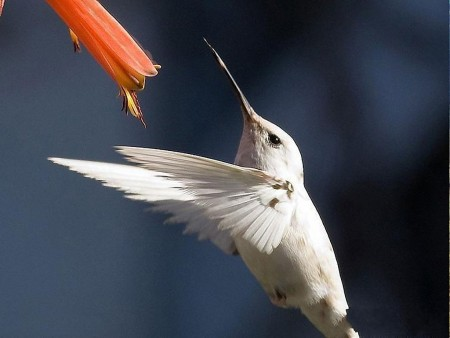طيور (5)