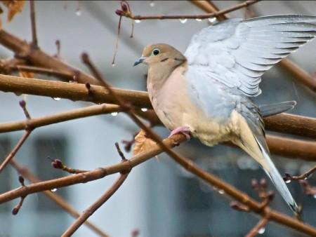 طيور (6)