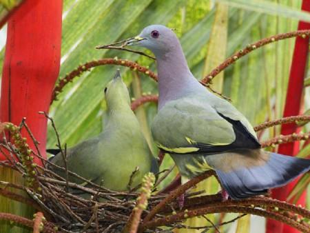 طيور (7)