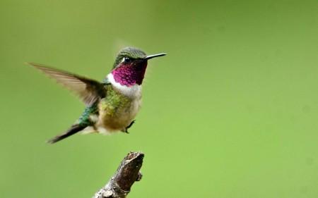 عصافير الجنة (4)