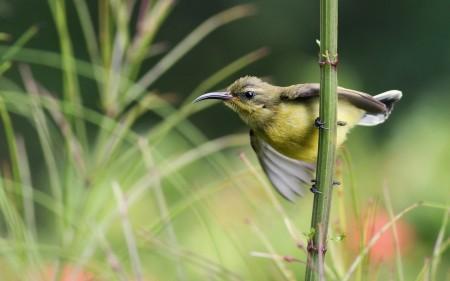 عصافير الحب (1)