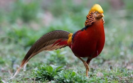 عصافير الحب (2)