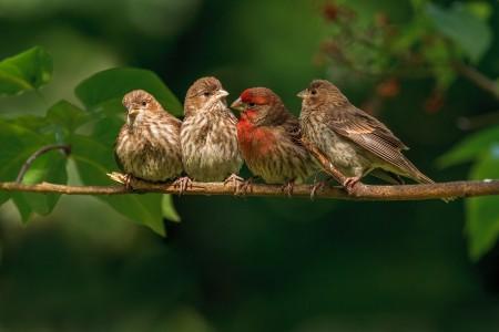 عصافير الحب (5)