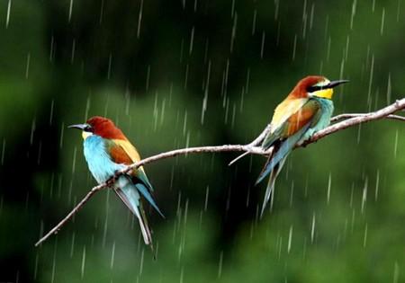 عصافير الزيبرا (1)