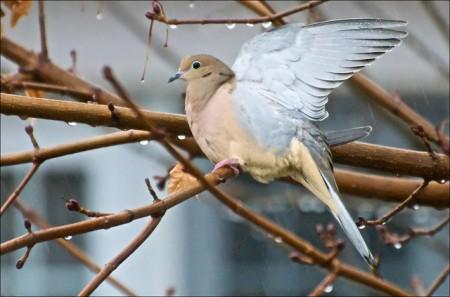 عصافير الزيبرا (3)