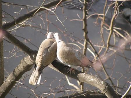 عصافير الزينة (3)