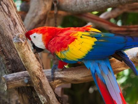 عصافير الزينة (5)
