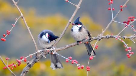 عصافير الكوكتيل (1)