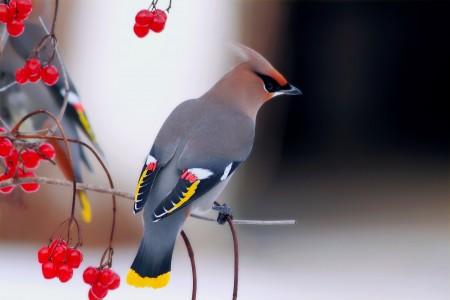 عصافير النيل (1)