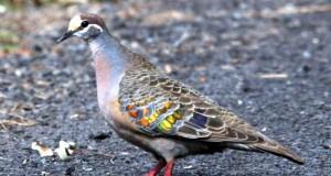 عصافير جميلة (2)