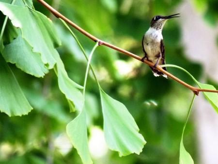عصافير جميلة (3)