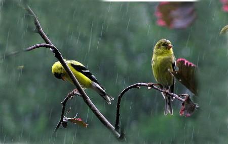 عصافير ملونة (6)