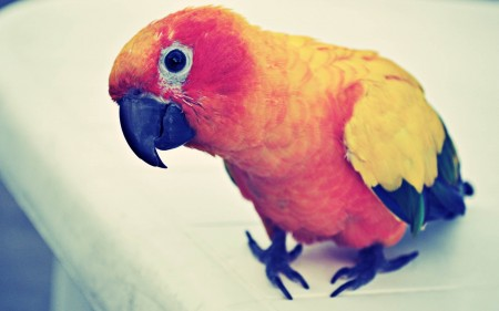 عصافير HD (1)