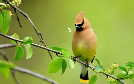 عصافير HD (2)