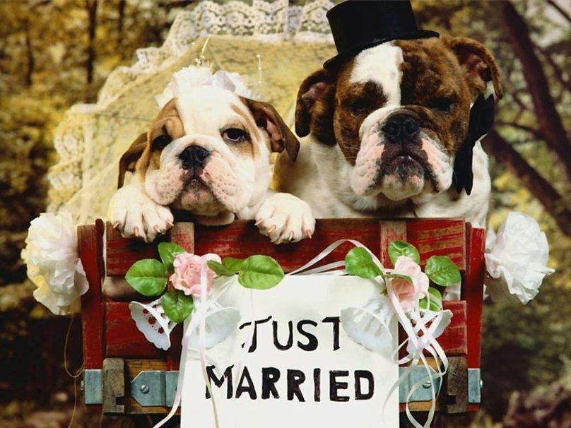 صور مبروك الزواج  (4)