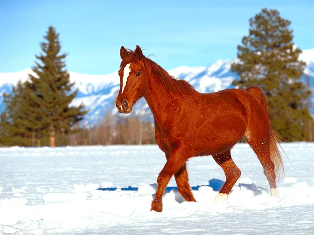 احصنة (2)