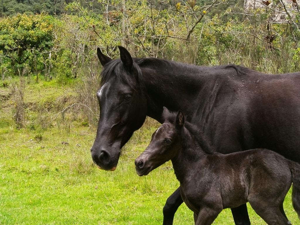صور احصنة (1)