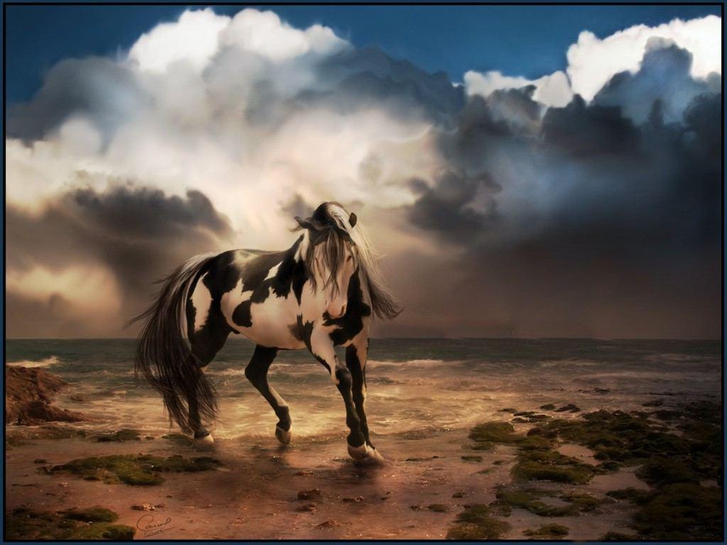 صور احصنة (3)