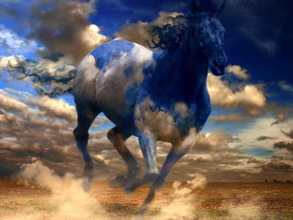 صور احصنة (4)