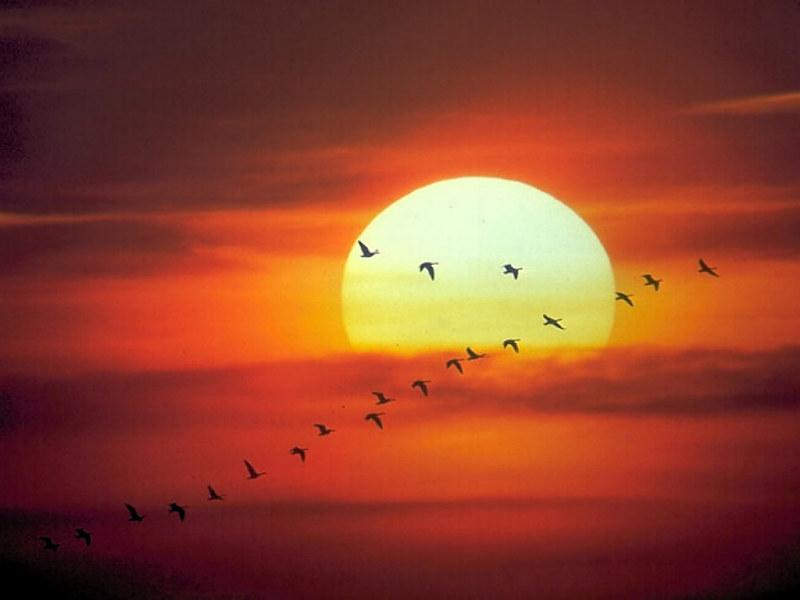 صور الشروق للشمس (5)