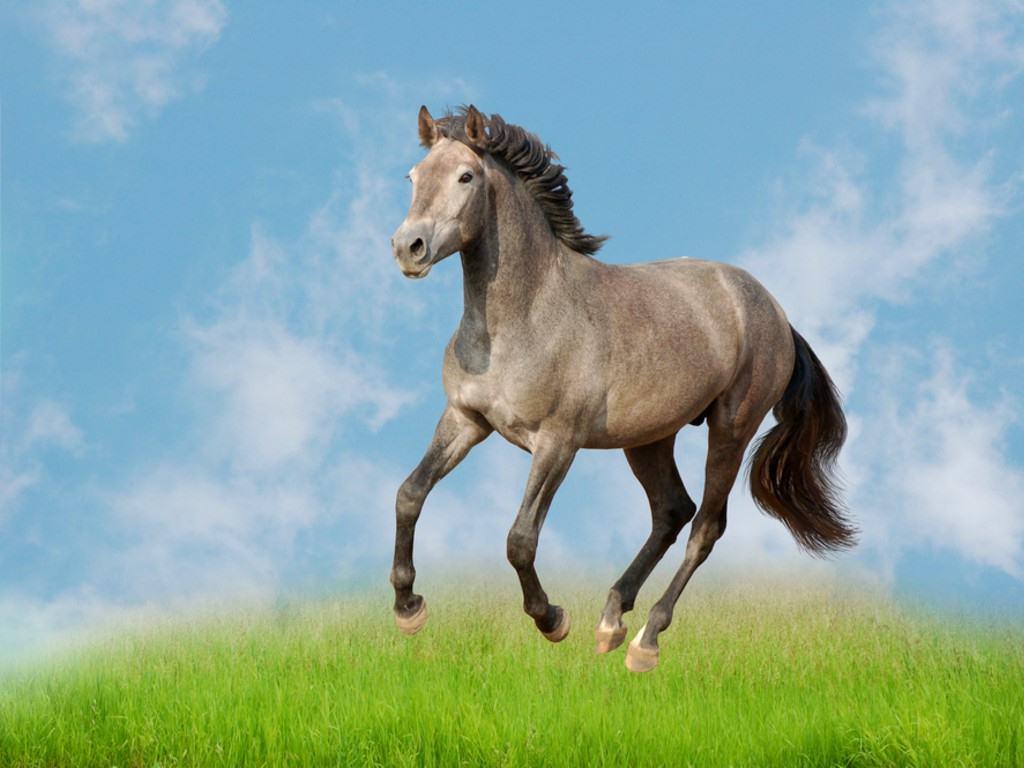 صور خيول (1)