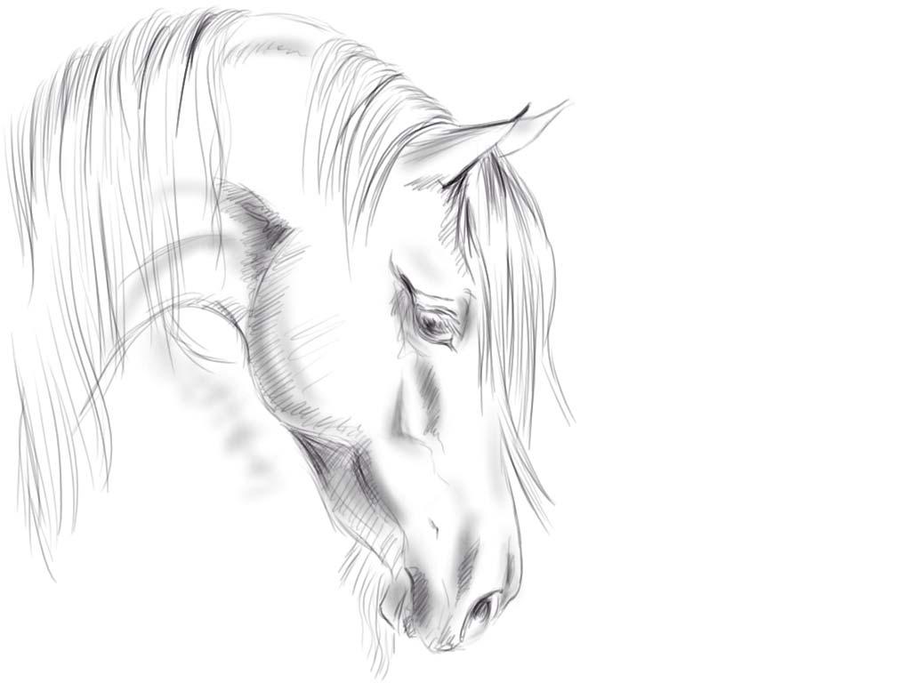 صور خيول (2)