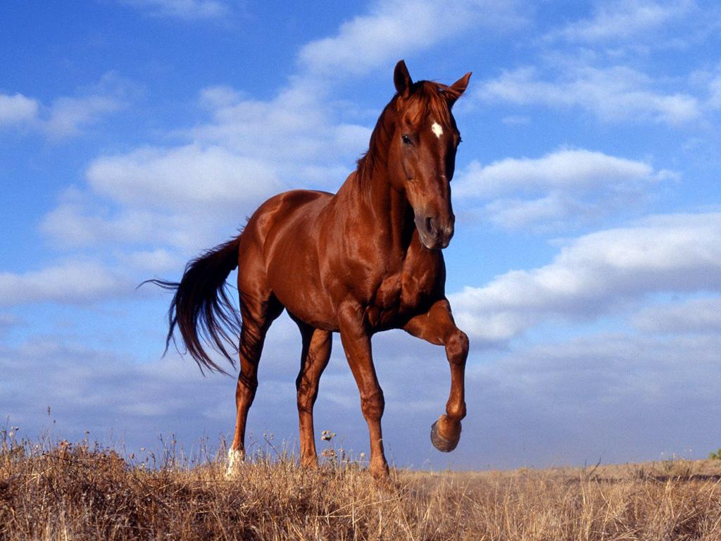 صور خيول (4)