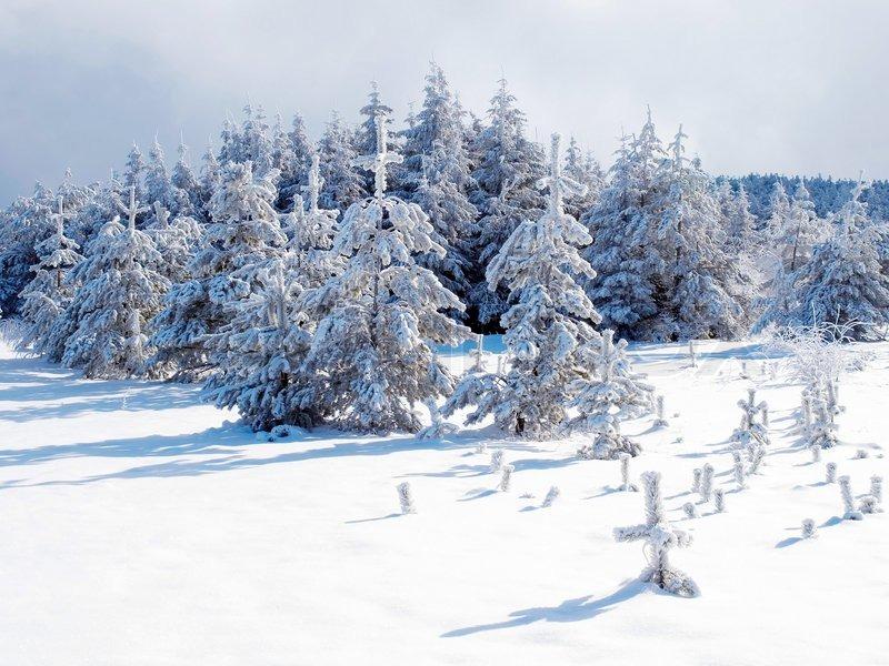 صور عن البرد جديدة (1)