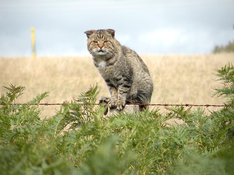 صور قطط وبسس (1)