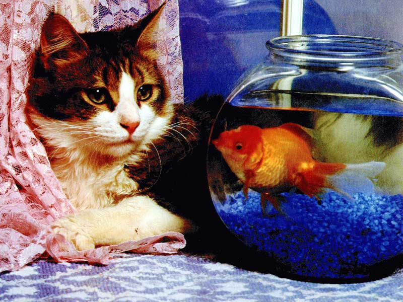 صور قطط وبسس (4)