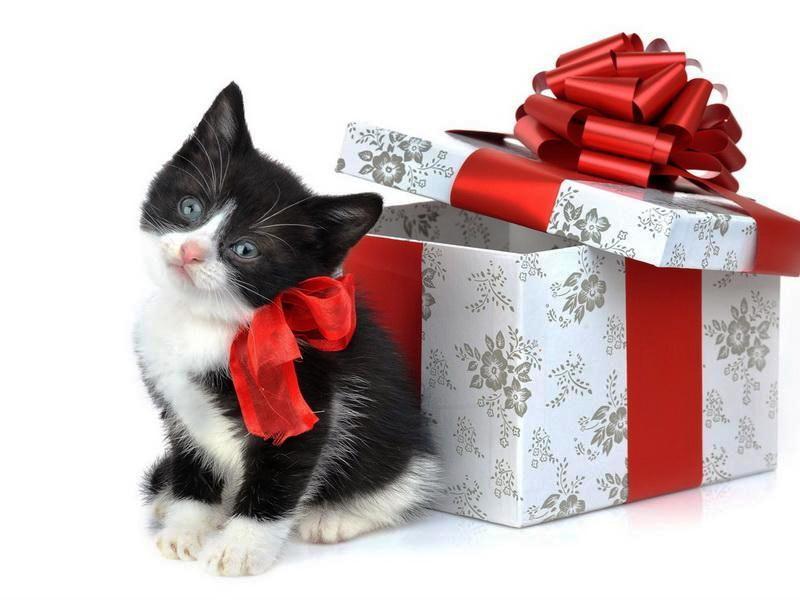 صور هدايا (3)