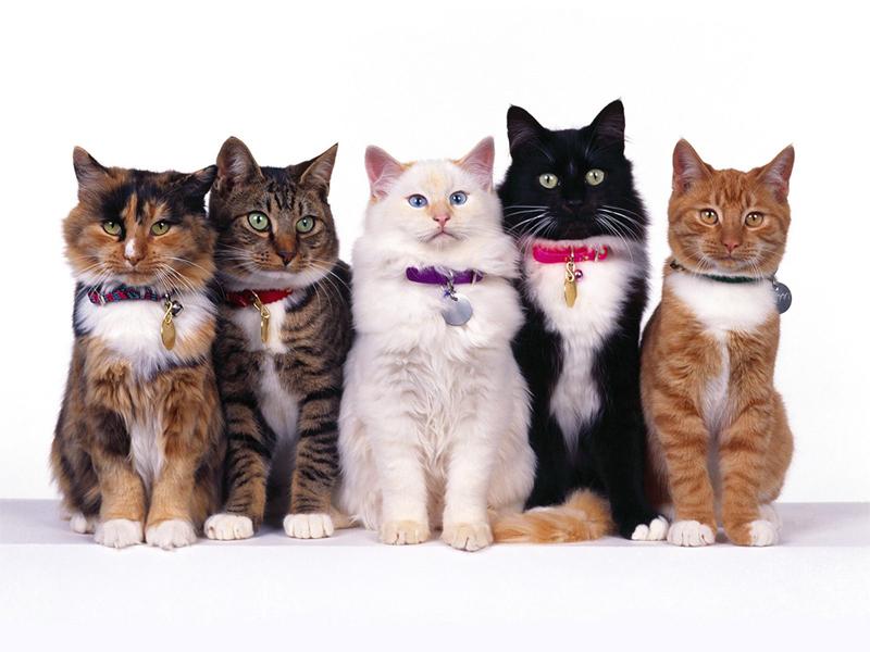 قطط بالصور (1)