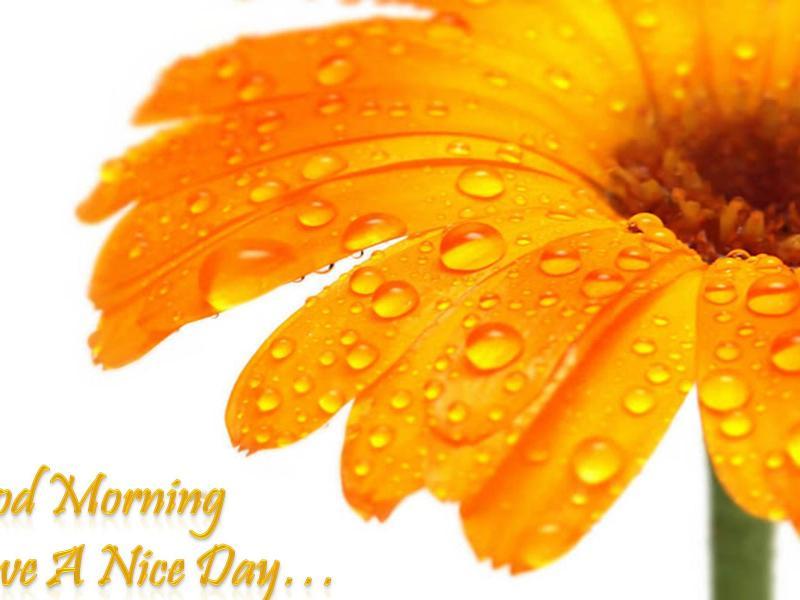 good morning photos (1)