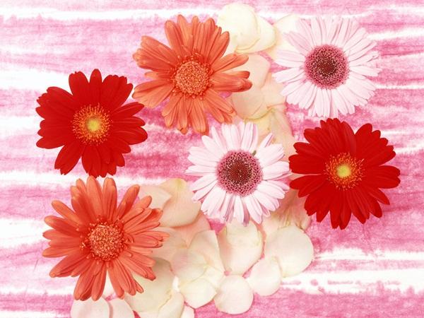 اجمل ازهار الربيع (4)