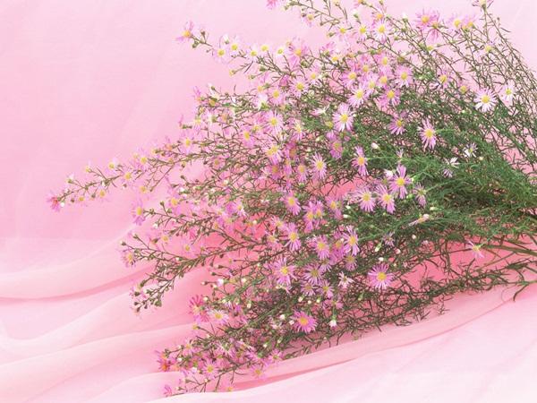 اجمل ازهار الربيع (5)