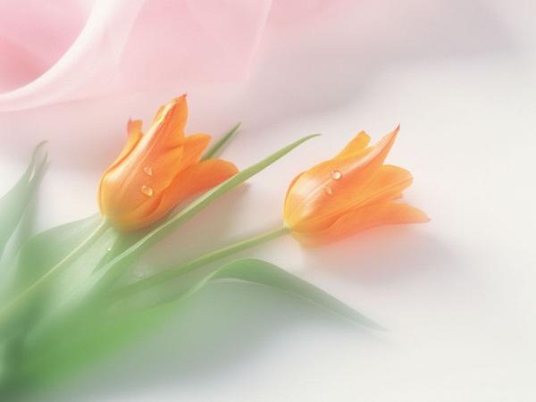 اجمل ازهار الربيع (6)