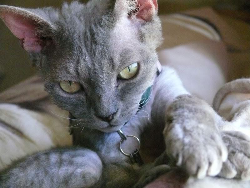 احلي صور قطط (2)