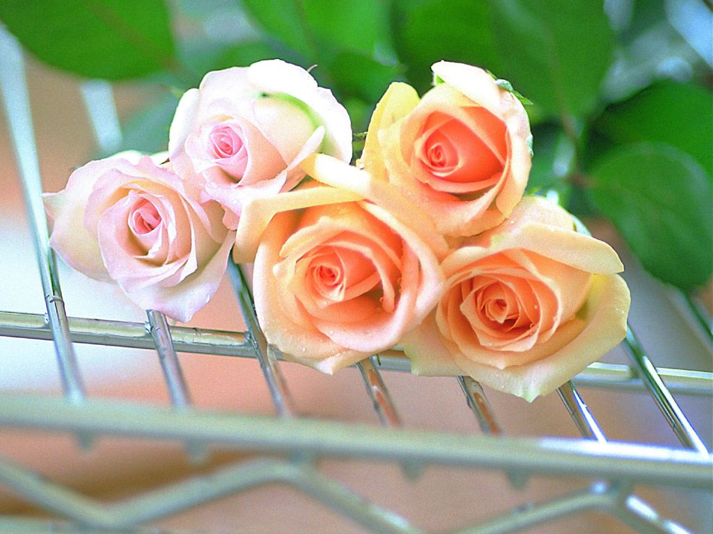 زهور حب ورومانسية (4)