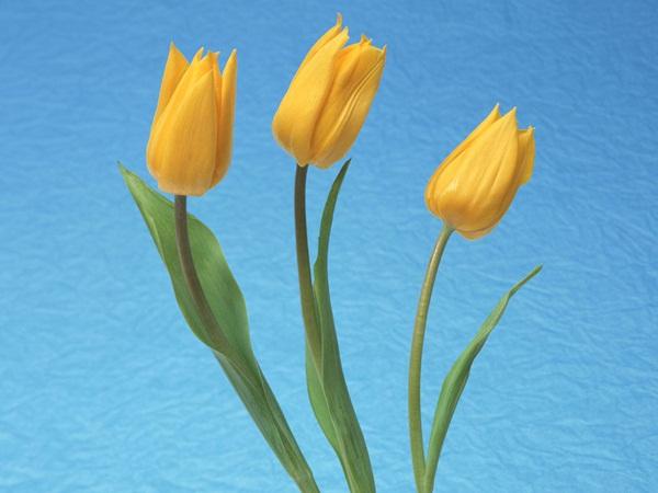 زهور حب (2)