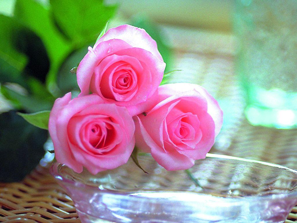 زهور روز وبمبي (3)