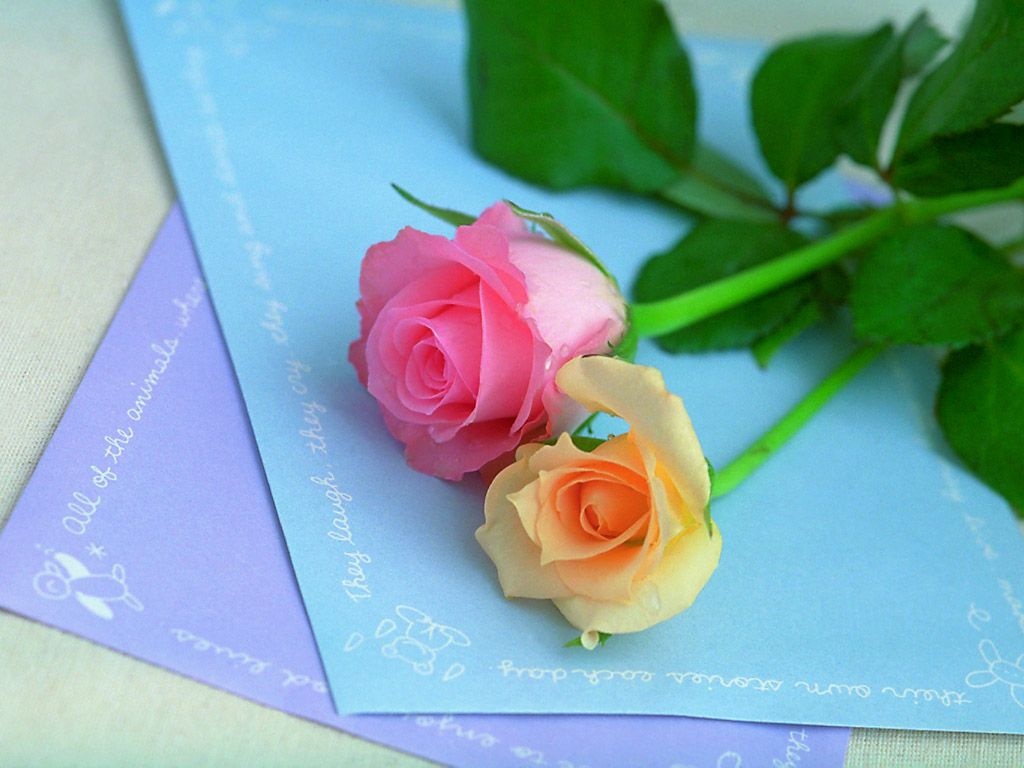 زهور روز وبمبي (7)