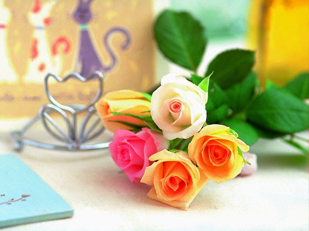 زهور روز وبمبي (8)