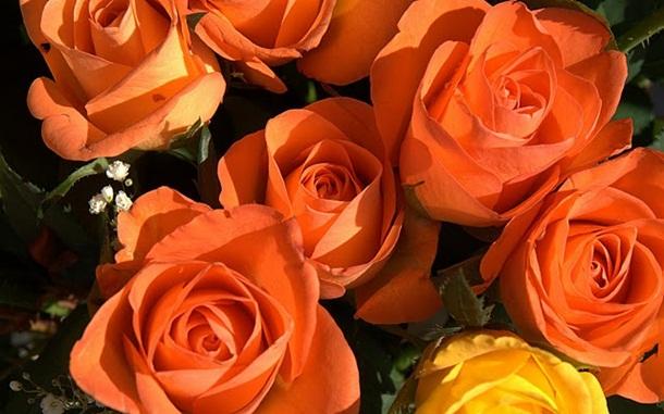 زهور (3)
