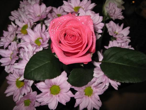 صور ازهار الحب وورود الحب واجمل ازهار الربيع (1)