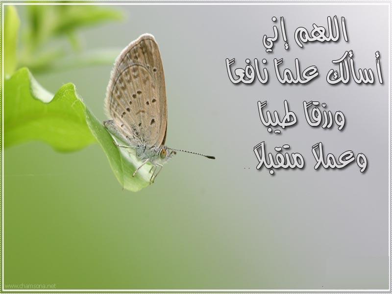 صور اسلاميات للفيس بوك وتويتر (1)