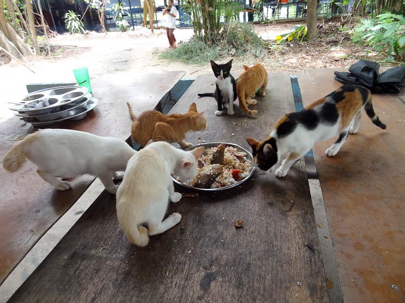 صور بسس حلوة وجميلة احلي قطط ناعمة (2)