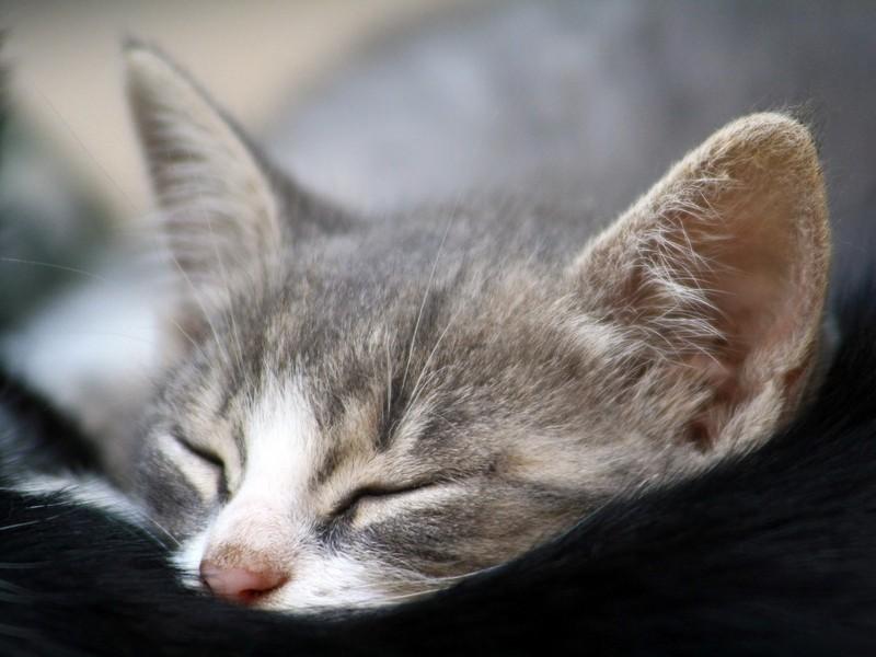 صور بسس حلوة وجميلة احلي قطط ناعمة (5)