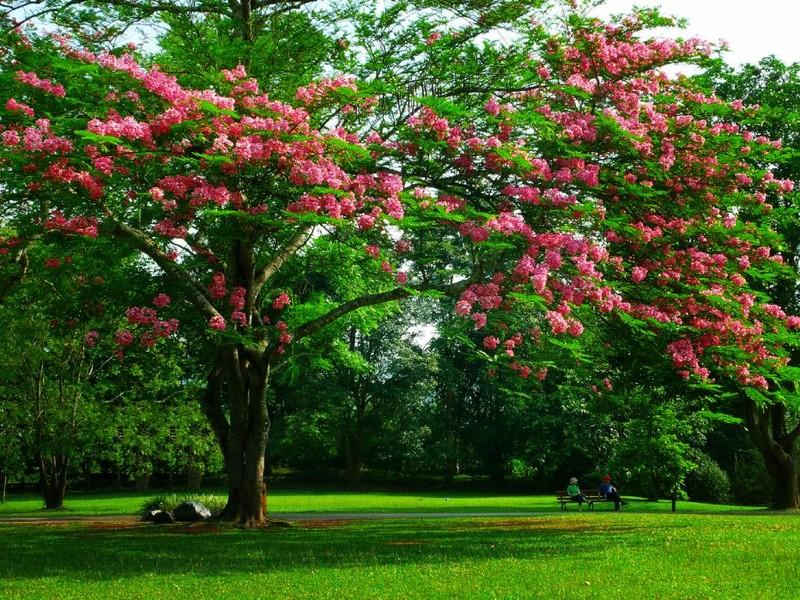 صور حديقة (1)